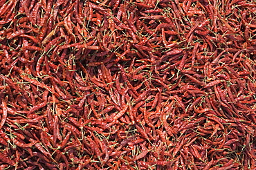 Chilli peppers, India