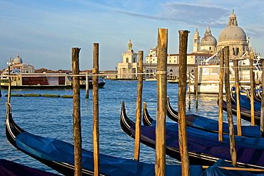 Gondolas at moorings, with Santa Maria della Salute church in the background, Venice, UNESCO World Heritage Site, Veneto, Italy, Europe