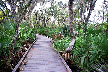 Boardwalk over the swamp, Canaveral National Seashore, near Titusville, Florida, United States of America, North America