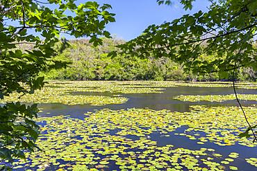 Bosherton Lily Ponds, Pembrokeshire Coast, Wales, UK