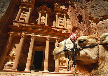 Camel and Low Angle View of the Khazneh, Petra, Jordan