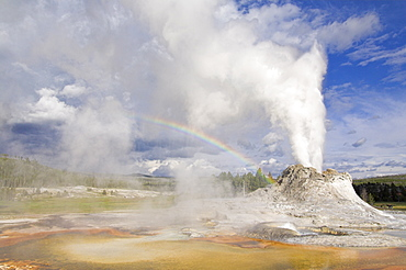 Eruption of Castle Geyser with rainbow in the spray, Upper Geyser Basin, Yellowstone National Park, UNESCO World Heritage Site, Wyoming, United States of America, North America
