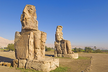 Two giant statues known as the Colossi of Memnon carved to represent the pharaoh Amenhotep III of the dynasty XVIII, West bank of the River Nile, Thebes, UNESCO World Heritage Site, Egypt, North Africa, Africa