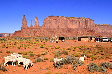 Usa, South West, Arizona & Utah, Navajo Reservation Of Monument Valley, The Three Sisters Red Rocks Peaks (Mesas), Navajo Compound And Sheep Grazing