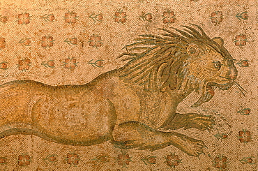 Syria, Orontes Valley, Apamea, The Museum Established In A Turkish Khan (Caravanserai),  An Outstanding Roman Mosaic Found In The Apamea Cardo Ruins And Representing A Hungry Angry Lion