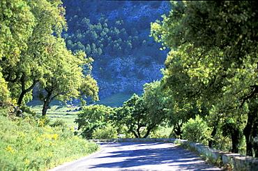 Spain, Andaloucia, Pueblos Blancos (White Villages) Road Before Grazalema
