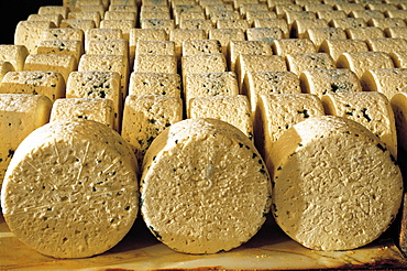 France, Aveyron, Roquefort Caves, Wrapped Cheeses Maturing