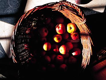 Cider Apples, Normandy, France
