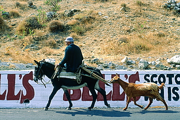 Greece, Crete, Man Riding A Mule Along With A Goat, Whiskey Ad On A Wall Behind