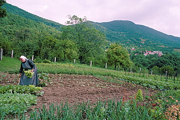 Woman in vegetable patch, view from the Pljesivica Vine Road, Zagreb area, Croatia, Europe