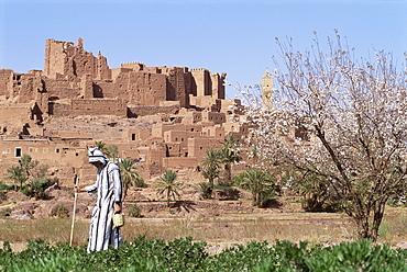 Farmer in field, Kasbah of Tifoultout (Tifoultoute), Morocco, North Africa, Africa