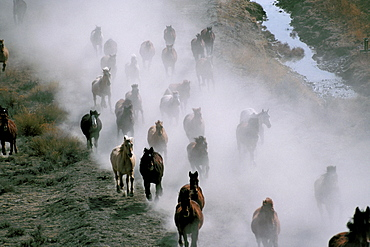 Horse ranch, Wyoming, United States of America, North America