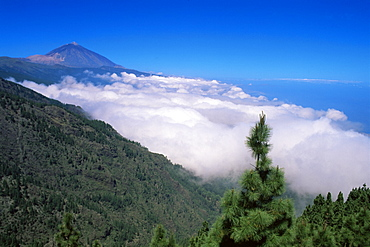 Mount Teide and pine trees, Teide National Park, Tenerife, Canary Islands, Spain, Atlantic, Europe