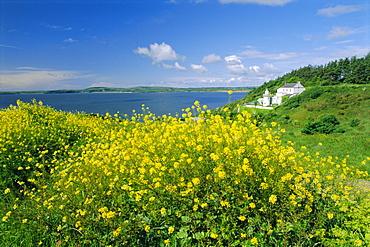 Hook Head Peninsula, County Wexford, Ireland