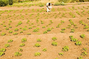 Cultivator, Soleb, Nubia, Sudan, Africa