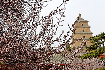 Great Wild Goose Pagoda (Dayanta), built in the Tang Dynasty in the 7th century, Xian, Shaanxi, China, Asia