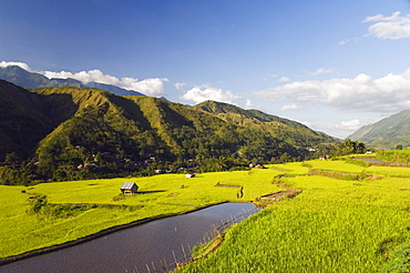 Rice terraces in Luplula Village, Tinglayan Town, The Cordillera Mountains, Kalinga Province, Luzon Island, Philippines, Southeast Asia, Asia
