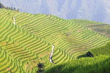 Dragons Backbone rice terraces, Longsheng, Guangxi Province, China, Asia