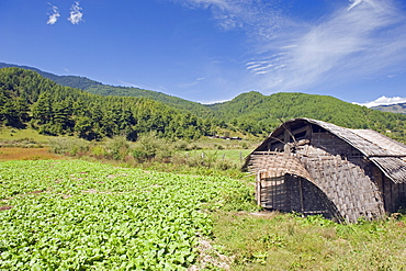 Bamboo hut, Bumthang, Chokor Valley, Bhutan, Asia