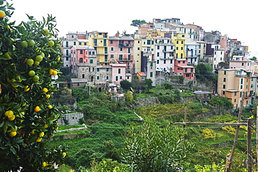 Pastel coloured houses, village of Corniglia, Cinque Terre, UNESCO World Heritage Site, Liguria, Italy, Europe