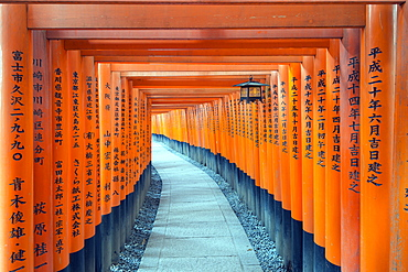Torii gate at Fushimi Inari Jinja, Shinto shrine, UNESCO World Heritage Site, Kyoto, Honshu, Japan, Asia
