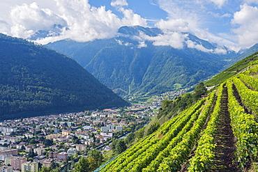 Vineyards, Martigny, Valais, Swiss Alps, Switzerland, Europe