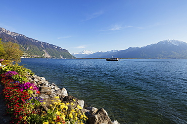 Spring flowers, Lake Geneva (Lac Leman), Montreux, Vaud, Switzerland, Europe