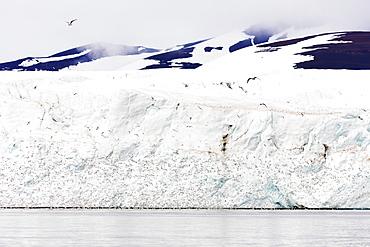 Black legged kittywake gulls (Rissa), Hornbreen Glacier, Spitsbergen, Svalbard, Arctic, Norway, Europe