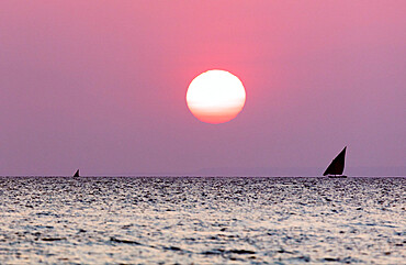 Dhow sailing boat on Indian Ocean at sunset, Stone Town, Zanzibar, Tanzania, East Africa, Africa