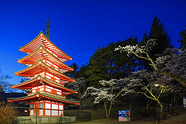 Cherry blossom at Chureito Pagoda in Arakurayama Sengen Park, Yamanashi Prefecture, Honshu, Japan, Asia
