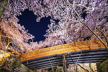 Heart shaped cherry blossom at Takato castle, Takato, Nagano Prefecture, Honshu, Japan, Asia
