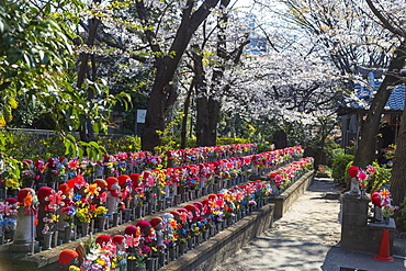 Spring cherry blossoms and Jizo statues, guardian deities of children, Zojoji Temple, Tokyo, Japan, Asia