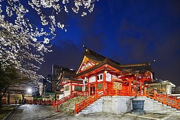 Spring cherry blossoms, Hanazono Shrine, Shinjuku, Tokyo, Japan, Asia