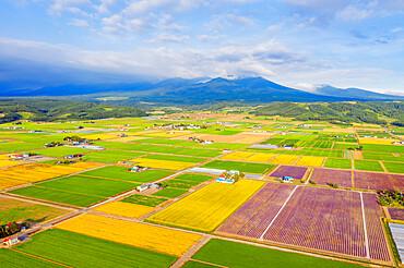 Aerial view of farmland, Furano, Hokkaido, Japan, Asia