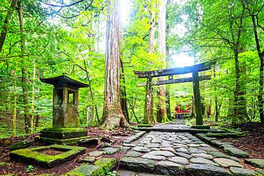 Kitano Shrine torii gate, Nikko, UNESCO World Heritage Site, Tochigi prefecture, Honshu, Japan, Asia