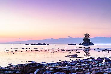Pine tree on a rock outcrop in the Sea of Japan, Ameharakaigan, Toyama prefecture, Honshu, Japan, Asia