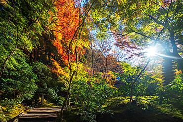 Autumn leaves at Ruriko-in temple, Kyoto, Kansai, Japan, Asia