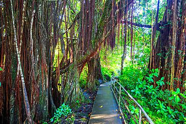 Akaka Falls hiking trail, Big Island, Hawaii, United States of America, North America