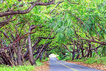 Big Island, Hawaii, United States of America, North America