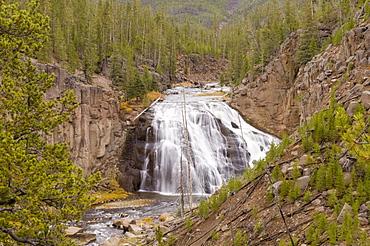 Gibbon Falls, Yellowstone National Park, UNESCO World Heritage Site, Wyoming, United States of America, North America