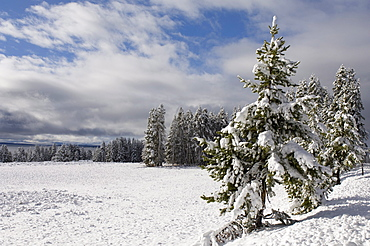 Yellowstone National Park area in winter, Wyoming, United States of America, North America