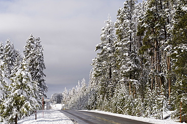 Yellowstone National Park in winter, UNESCO World Heritage Site, Wyoming, United States of America, North America