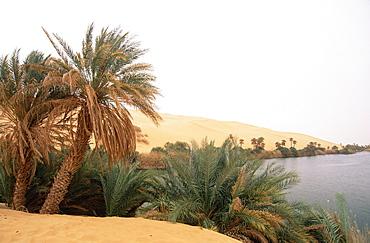 Palm trees and lake, Erg Ubari, Sahara Desert, Fezzan, Libya, North Africa, Africa