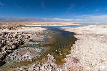 Laguna Chaxa, Salar de Atacama, Atacama Desert, Chile, South America