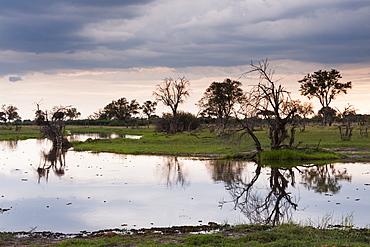Khwai Concession Area, Okavango Delta, Botswana, Africa