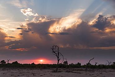 Savuti Marsh at sunset, Botswana, Africa