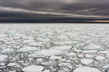 A view of the melting sea ice on the Arctic Ocean at 81 degrees, north of the Svalbard islands, Arctic, Norway, Europe