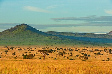 View of Lualenyi, Tsavo Conservation Area, Kenya, East Africa, Africa