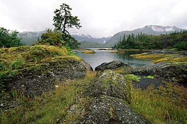 Moss covered rocks at water's edge, Prince William Sound, Alaska, United States of America, North America