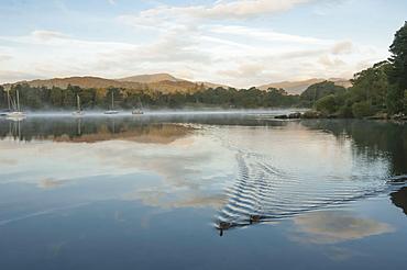 Ducks on Lake Windermere in Lake District, England, Europe